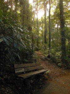 Dorrigo Rainforest NP, Dorrigo